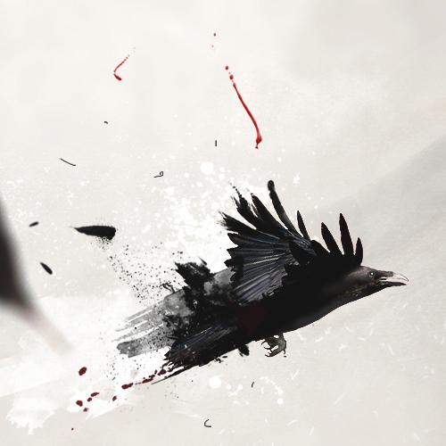 raven_500px